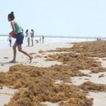 México buscará desviar el sargazo antes de que llegue a sus costas del Caribe