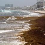 Alertan que el sargazo volverá a llegar de forma masiva al Caribe mexicano