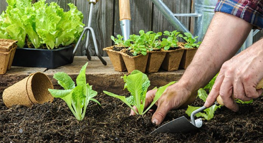 Comenzó la entrega de semillas en Pavón, Chacras y Casco Urbano