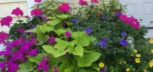 3 Tips for Great Summer Flowers