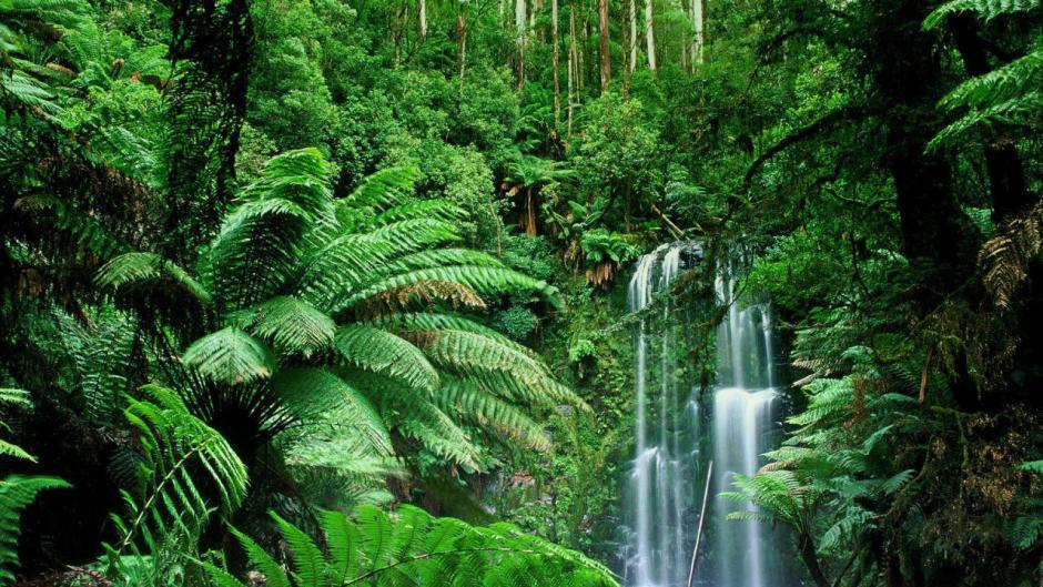 Pequenas cachoeiras em uma selva