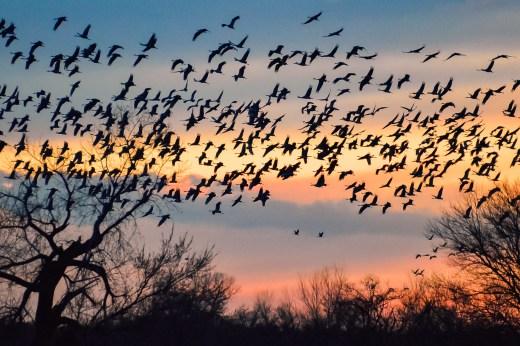 Sunset cranes 3
