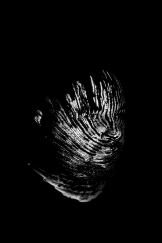 photo artwork black and white cake