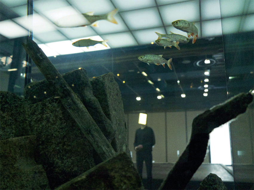Pierre Huyghe at the Centre Georges Pompidou (Installation View) (2013 – 2014). Image courtesy of the artist and Marian Goodman Gallery, New York. Photo: Pierre Huyghe.