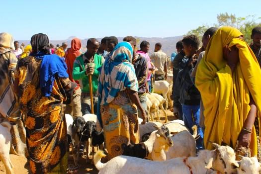 Babile goat market