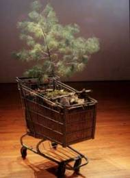 portable forest 2002-2003