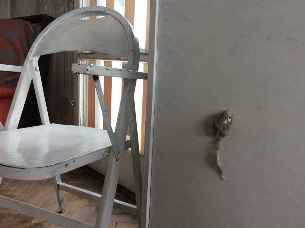 A toy mouse runs up a cupboard door. Edward Krasiński's studio apartment, Warsaw, Poland, 2016
