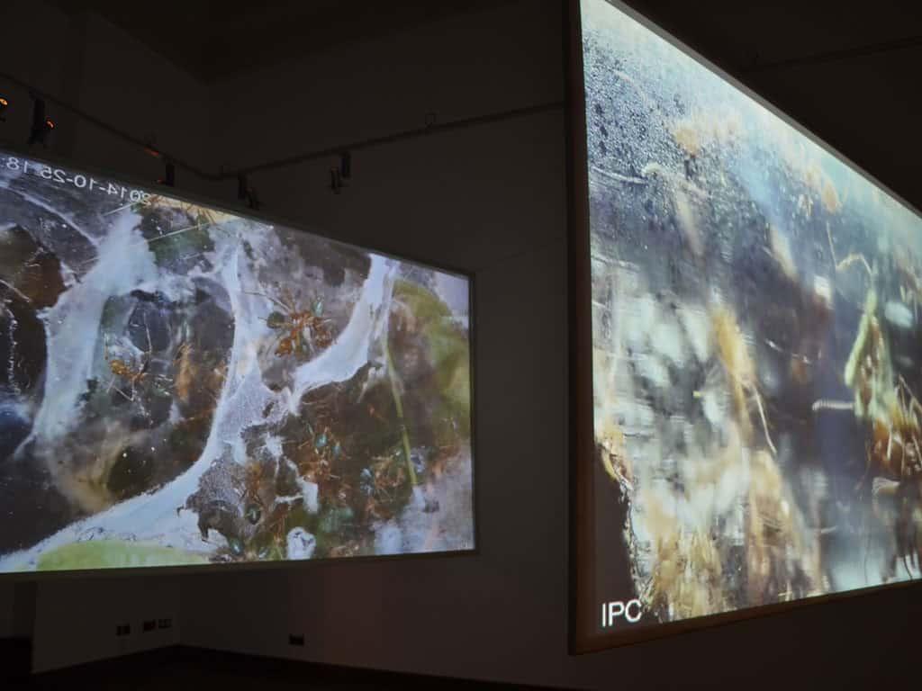Elvin Flamingo, Symbiotic natureof creation, video-installation, live stream, 2014