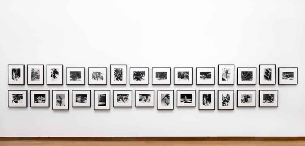 Christopher Williams, Angola to Vietnam*, 1989. Collection Stedelijk Museum Amsterdam, donation Thomas Borgmann, Berlin. (Installation Stedelijk Museum November 2017. Photo: Gert Jan van Rooij)