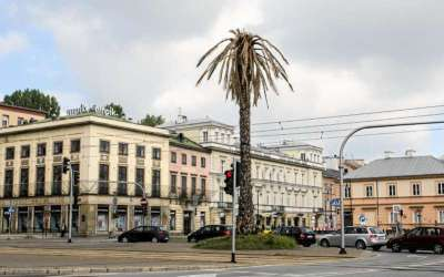 WHY THE ICONIC WARSAW PALM HAS WITHERED OVERNIGHT?