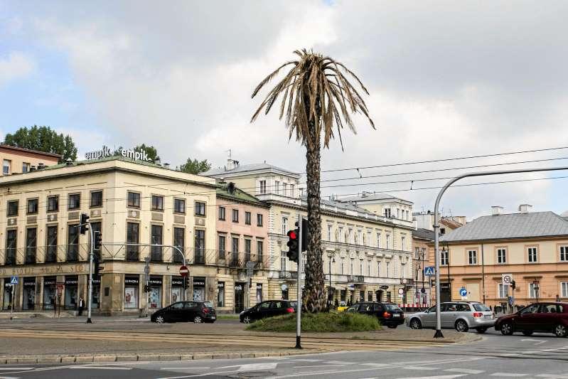 palma Rajkowska