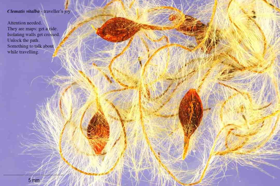 Milena Bonilla, Floraphilia. Revolution of Plants photo: Tamara Lorenz