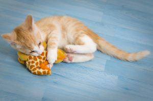 kitten chewing on a stuffed toy
