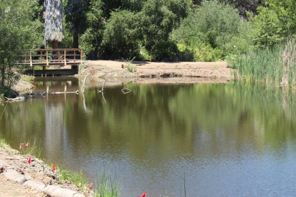 Anstine Pond and Bridge by Katie Sweeney
