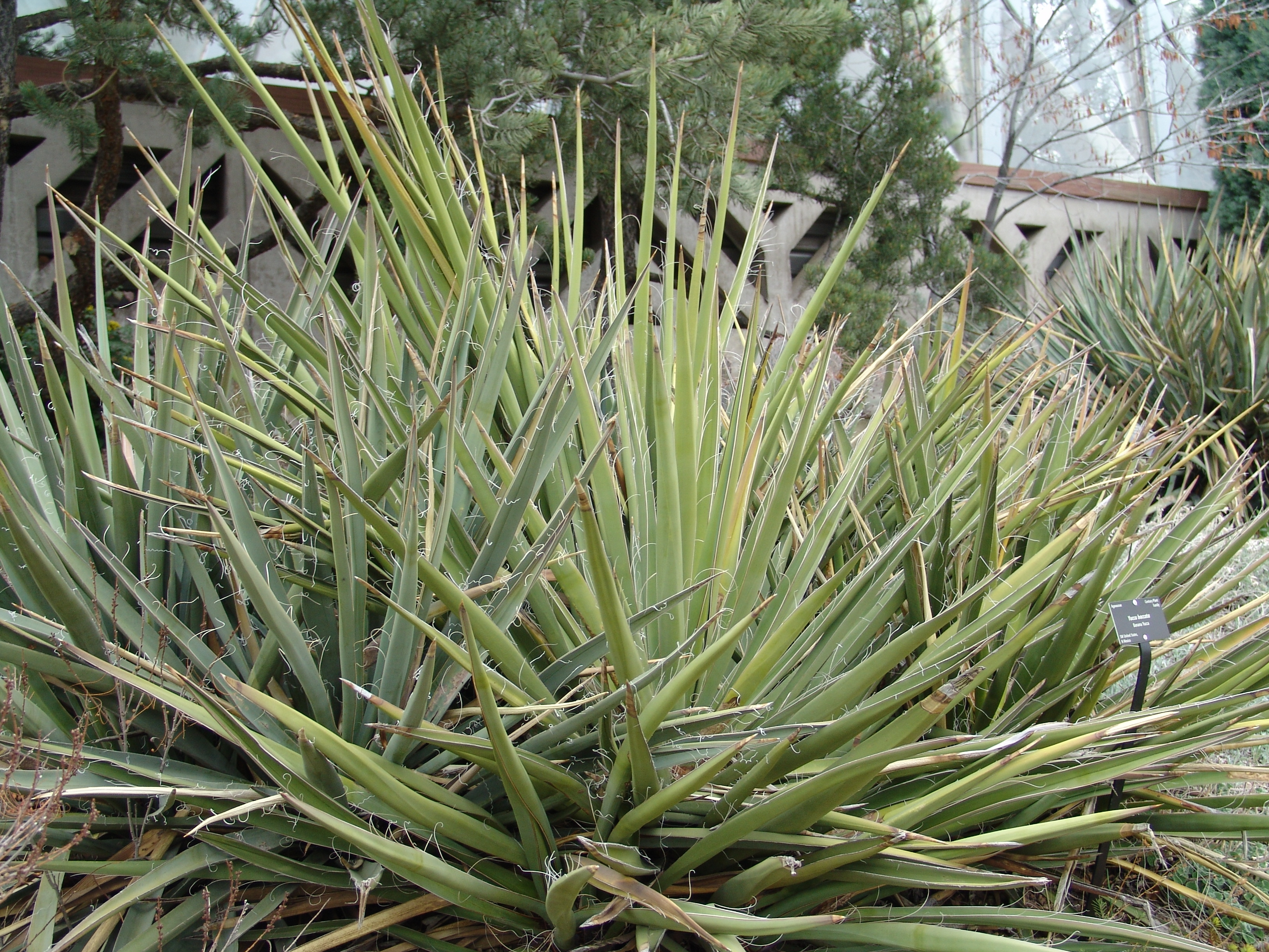 Definition Of Yucca Geography