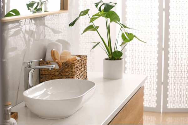 Handy hints for your home in 2021 bathroom plants
