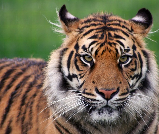 Exclusive Tiger Global Raising Another Huge Fund Fortune