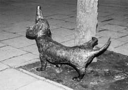 Памятники собаке. Писающие собаки.