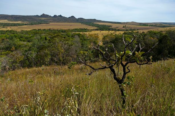 Companies Can Find Deforestation-Free Soy in Brazil's Cerrado, Thanks to  New Data | Global Forest Watch Blog
