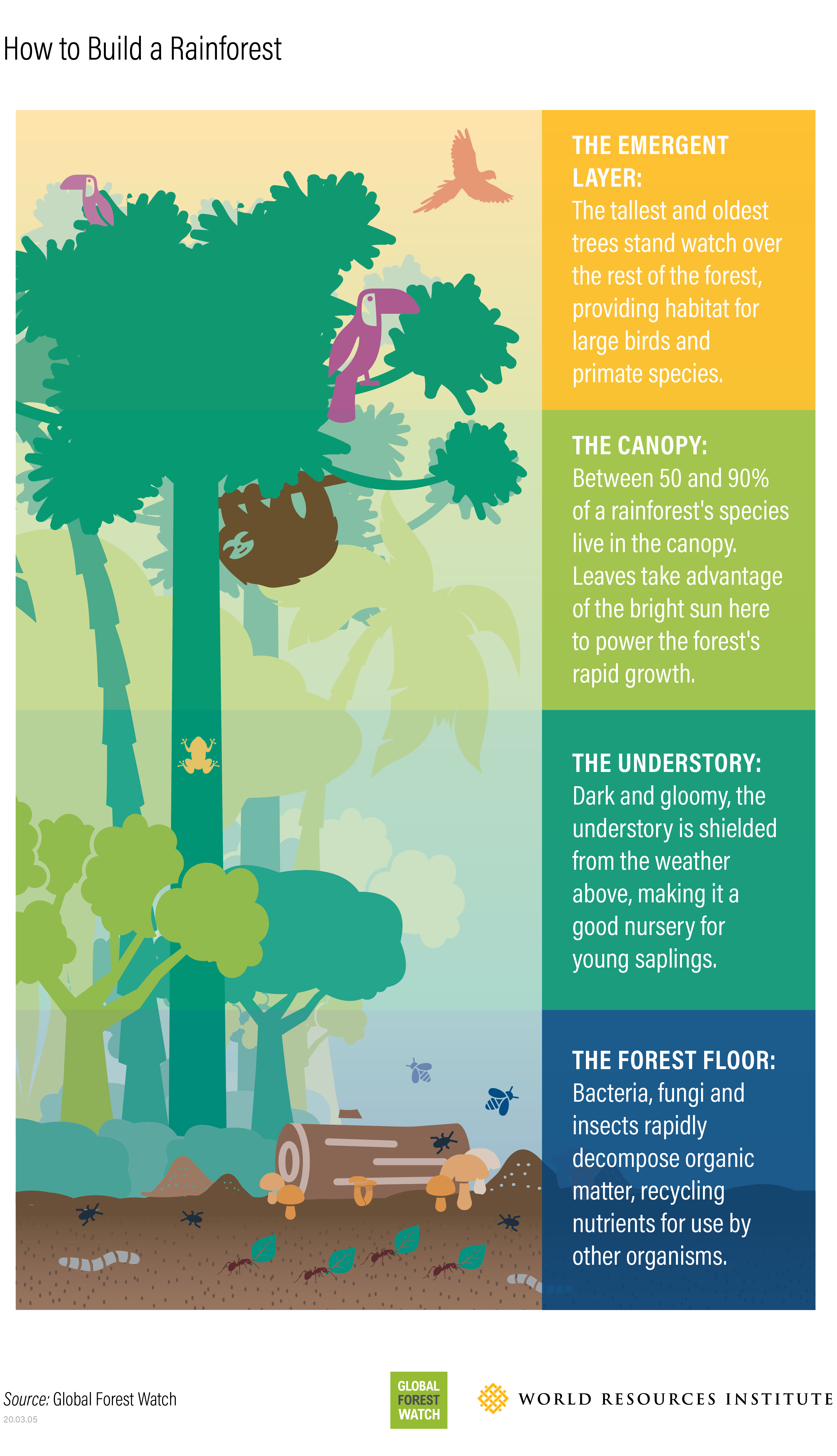 How Rainforests Are Formed And How They Are Being