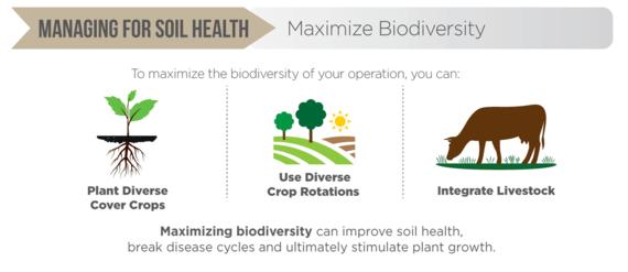 Biodiversity Infographic