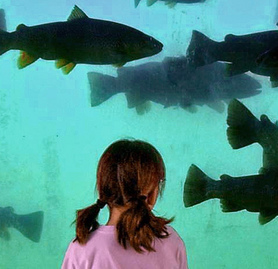 Young girl watches large trout pass by through underwater viewing area