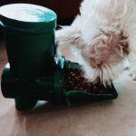 Diy Dog Food Dispenser 9 Steps With Pictures Instructables