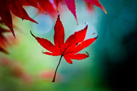 Autumn (Fall) photography – tips on capturing colours