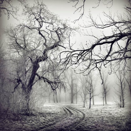 Winter landscapes – black and white photos by Borbála Sütö-Nagy