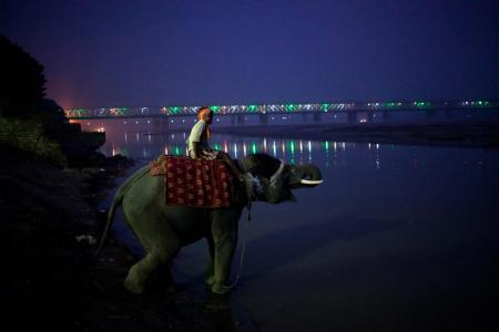 In Focus: photos from the Sonepur cattle fair in India