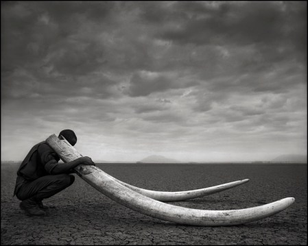 Conserving Africa's wildlife through photography – photos by Nick Brandt