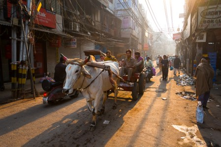 The Gastronomy of the Eye, Photographing on the Streets of Old Delhi