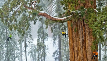 Photographing a 3200 year old sequoia tree