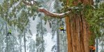 Related item: 'Photographing a 3200 year old sequoia tree'