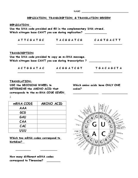 Replication Transcription And Translation Worksheet - ommunist