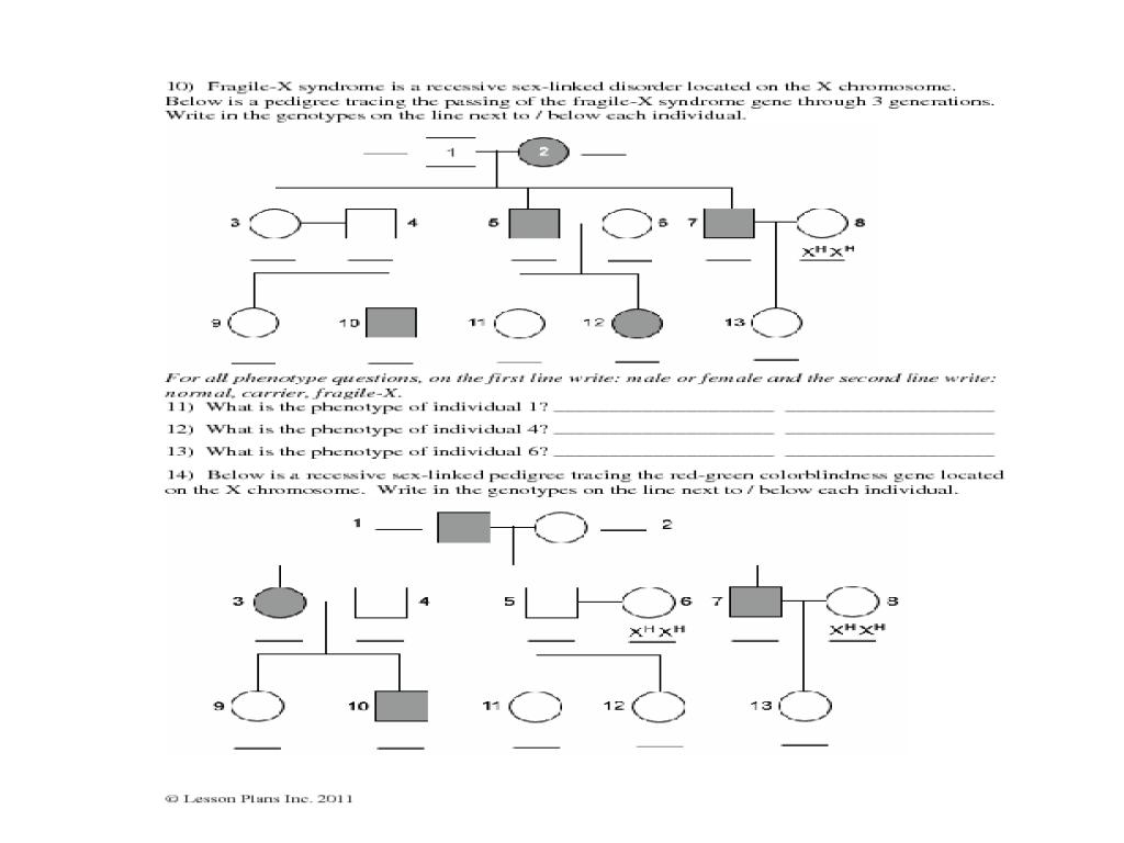 Linked Traits Worksheet Answers