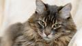 ماليزيا: السجن 34 شهرا لرجل قتل قطة بطريقة وحشية