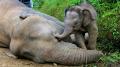تجارة العاج تودي بحياة 100 ألف فيل إفريقي