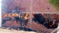 حريق مخزن الأعلاف: العثور على جثةالطفل المفقودمتفحمة داخله