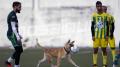 كلب يقتحم الملعب خلال مباراة المرسى وحمام الأنف ويفتكّ الكرة