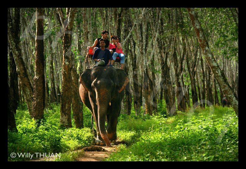 elephants-treking-phuket