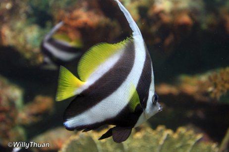phuket-aquarium-1-1