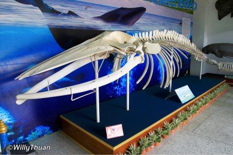 phuket-aquarium-1-3