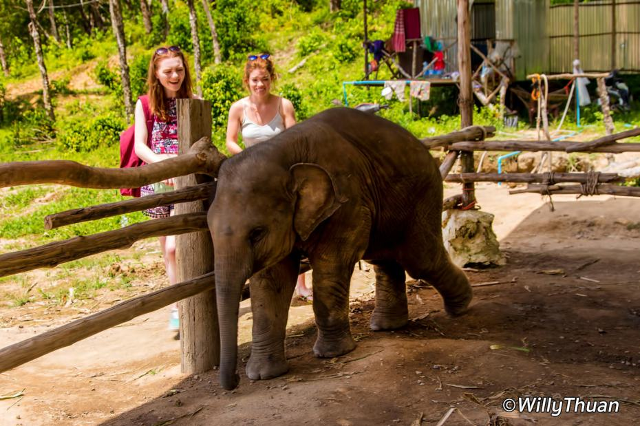elephant-jungle-sanctuary-phuket