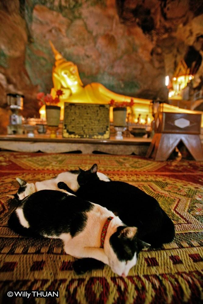 wat-suwan-khuha-cats