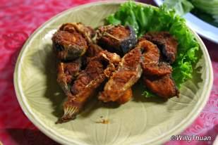 nam-yoi-fish