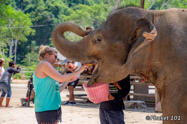 phuket-elephant-retirement-camp-6