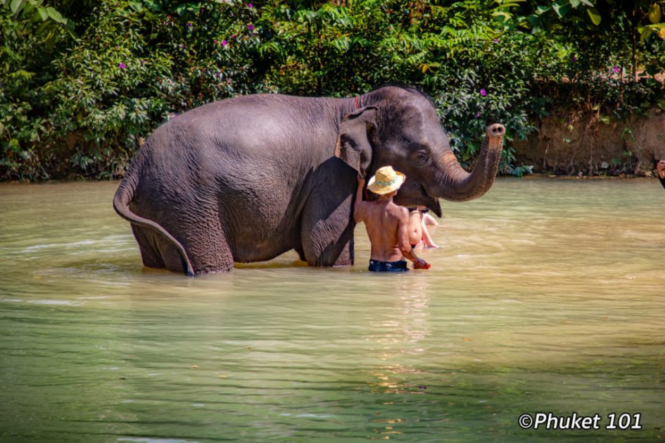 Phuket Elephant Retirement Park