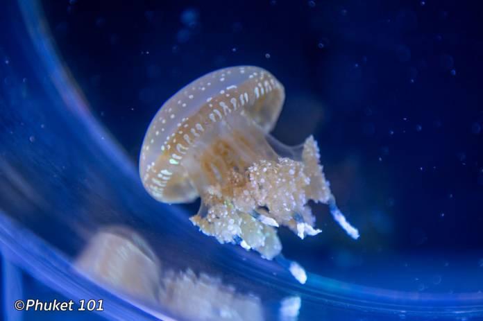 jellyfish-aquaria-phuket