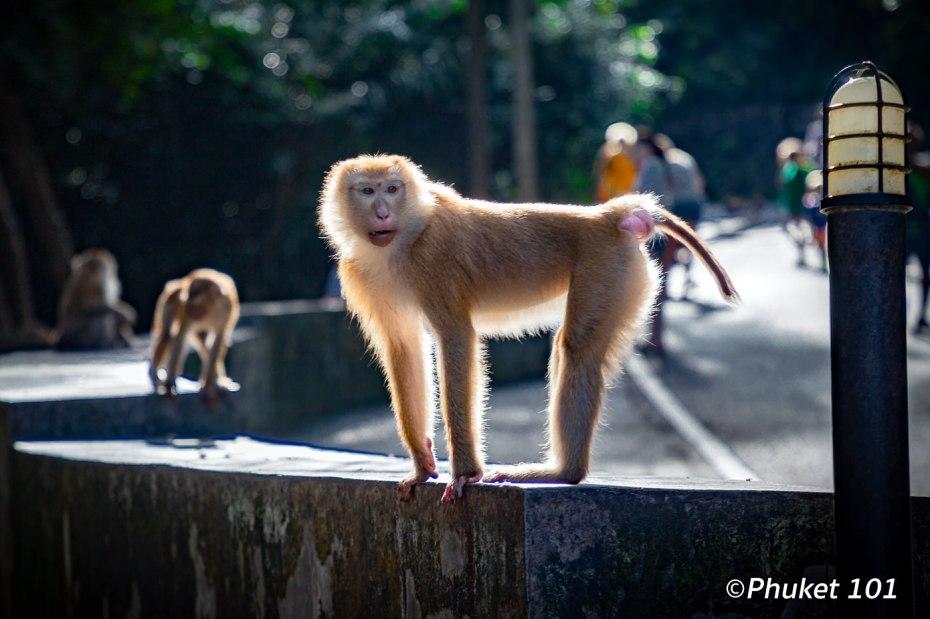monkeys-hill-phuket-town